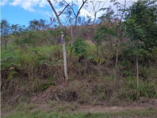 Rincón Puerto Rico Homes for Sale